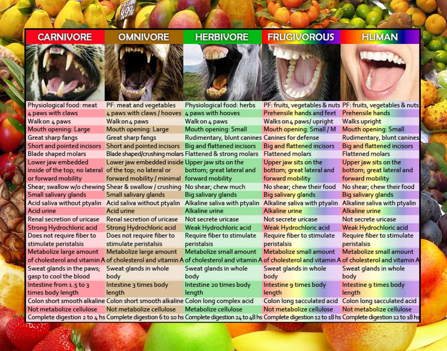 Are Humans Frugivores Amp Designed To Eat Mostly Fruit
