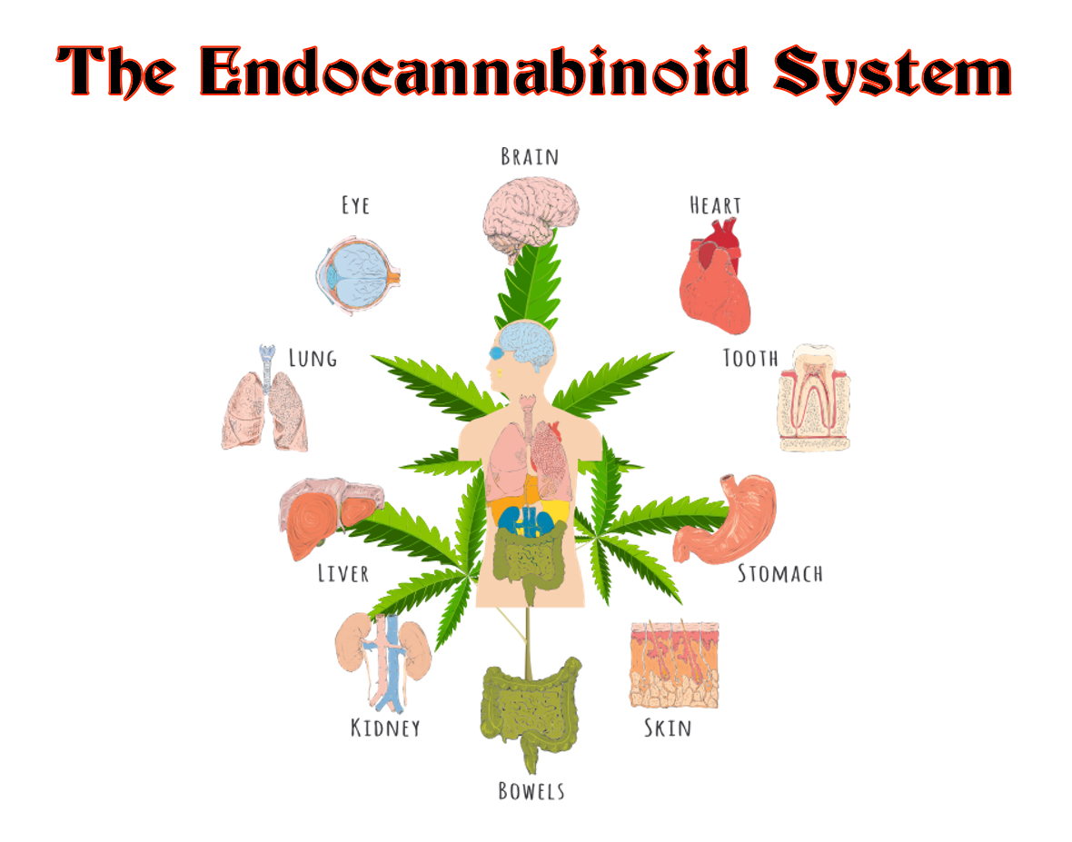 fiat theory of money with The Endocannabinoid System on  in addition Fastest Cars In The World together with Pieter Bruegel Elder likewise  as well Boom Y Colapso En Mercados Emergentes.